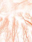 创造性的橙色树荫异常的抽象样式 免版税库存照片