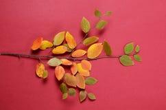 创造性的秋天构成 在红色背景的树枝和黄色叶子 图库摄影