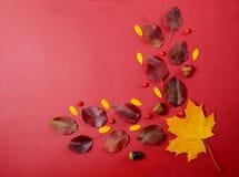 创造性的秋天构成 在红色背景的树枝和黄色叶子 免版税图库摄影