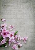 创造性的背景 亚麻制织品和春天花 免版税库存图片