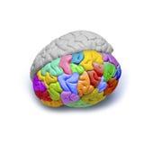 创造性的脑子 库存照片