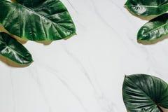 创造性的自然布局由热带叶子和花制成 平的位置 背景概念框架沙子贝壳夏天 库存照片