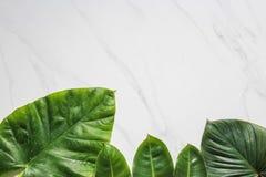 创造性的自然布局由热带叶子和花制成 平的位置 背景概念框架沙子贝壳夏天 免版税图库摄影