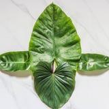 创造性的自然布局由热带叶子和花制成 平的位置 背景概念框架沙子贝壳夏天 免版税库存照片