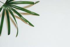 创造性的自然布局由热带叶子和花制成 平的位置 背景概念框架沙子贝壳夏天 库存图片