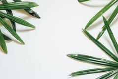 创造性的自然布局由热带叶子和花制成 平的位置 背景概念框架沙子贝壳夏天 免版税库存图片