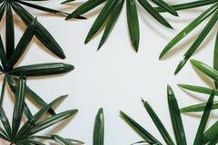 创造性的自然布局由热带叶子和花制成 平的位置 背景概念框架沙子贝壳夏天 图库摄影
