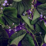 创造性的自然离开布局 超自然的概念,紫外上色背景,时尚样式 免版税图库摄影