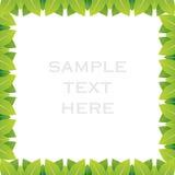 创造性的绿色叶子框架设计背景 免版税库存图片