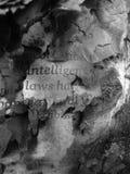 创造性被烧的书杂志的文本 免版税图库摄影