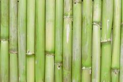 创造禅宗场面的激动人心,自然绿色竹背景 免版税库存照片