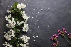 初夏白色和桃红色花在板岩开花 免版税库存图片