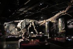 利昂恐龙 免版税库存图片