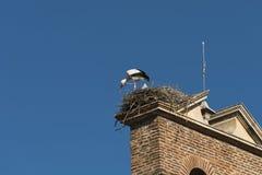 利昂西班牙:在巢的鹳 库存图片