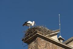 利昂西班牙:在巢的鹳 图库摄影