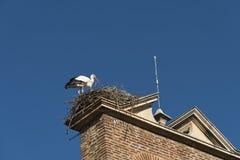 利昂西班牙:在巢的鹳 免版税库存图片