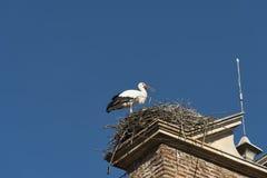 利昂西班牙:在巢的鹳 免版税图库摄影