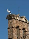 利昂西班牙:在巢的鹳 库存照片