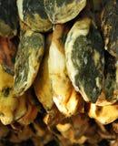 利比亚火腿在干燥棚子 免版税库存图片