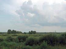 别列津纳河的洪泛区 夏天 8月海湾草甸和森林 库存照片