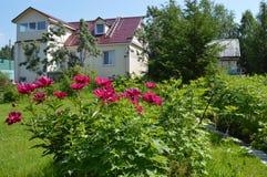 别墅在一个夏天早晨 库存图片
