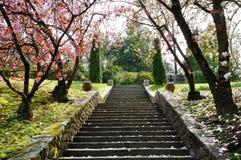 别墅塔兰托木兰桃红色花和步 库存图片