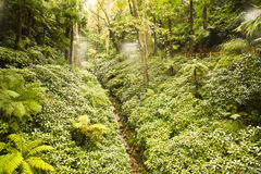 别墅Carlotta庭院的雨林  库存图片
