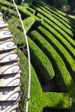 别墅Pisani,斯特拉,意大利-绿色迷宫 库存照片