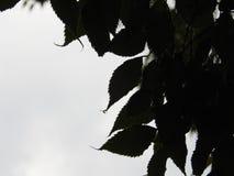 水滴紧贴到叶子 库存图片
