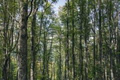 到森林 免版税库存照片