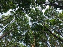 到森林 免版税库存图片