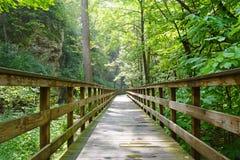 到森林 免版税图库摄影