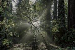 到森林 库存图片