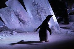 到蒙特利尔生物圆顶-企鹅的参观 库存照片