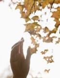 到达为一片叶子的人的手在秋天,明亮地被点燃 免版税图库摄影