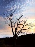 到达为天空的孤立光秃的树 库存照片