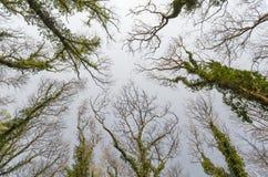 到达为天空的树 库存图片