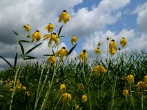 到达在太阳的野花 库存图片