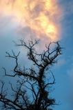到达对美丽的天空的老死的树 免版税库存照片