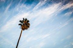 到达往天空的棕榈树 库存图片