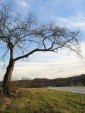 到达横跨乡下公路的冷漠的树 免版税库存图片