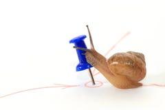 到达目标的蜗牛和亲吻目标。 免版税库存照片