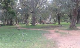 到Anuradahapura的旅行 库存图片