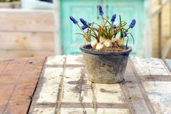 制表咖啡馆海滩海花瓶蓝色白色淡紫色紫色椅子沙子太阳光浪漫葡萄酒根 库存图片
