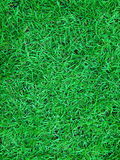 刷新对绿草 免版税图库摄影