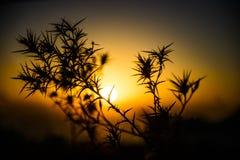 刺剪影在日落的 图库摄影