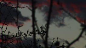 刺和红色云彩 影视素材
