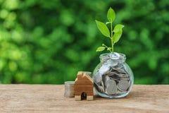 刺激以充分与成长新芽植物和木minia的硬币 免版税库存照片