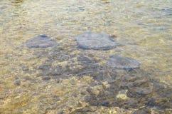 刺激光线海滩科苏梅尔,墨西哥 免版税库存照片