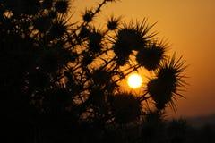 刺灌木日出和剪影  图库摄影